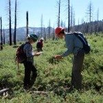 California Wildfires Help Southern Plants Shift Northward